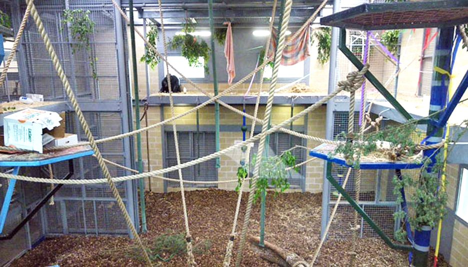 Exhibition Displays Adelaide : Monarto zoo chimpanzee exhibit harrold kite